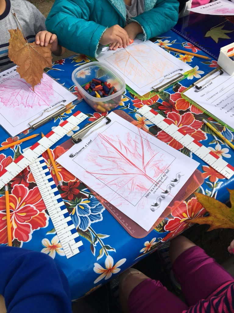 1st graders making leaf rubbings