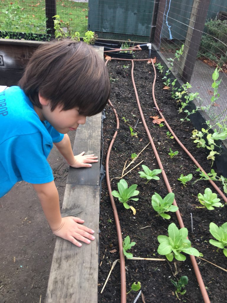 2nd graders checking out their seedlings