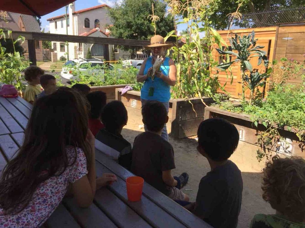 2nd graders learning about corn